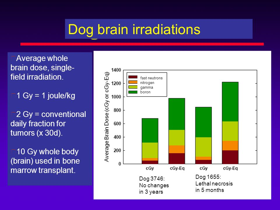 Dog brain irradiations