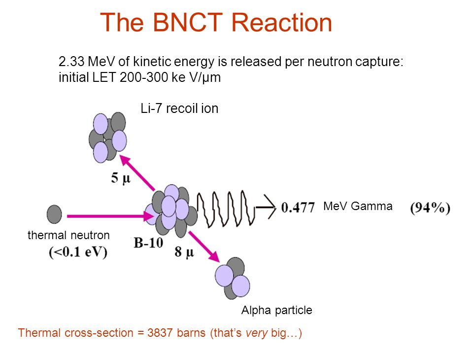 The BNCT Reaction 2.33 MeV of kinetic energy is released per neutron capture: initial LET 200-300 ke V/µm.
