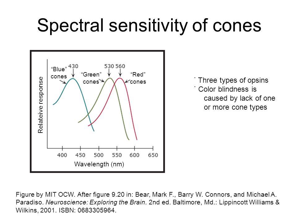 Spectral sensitivity of cones