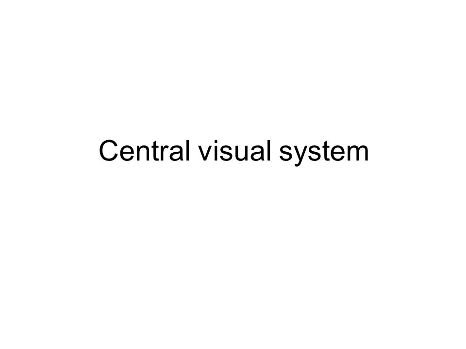 Central visual system