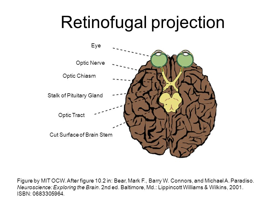Retinofugal projection