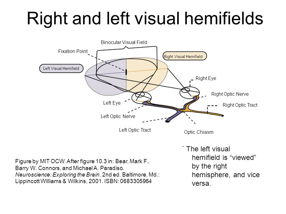 Right and left visual hemifields