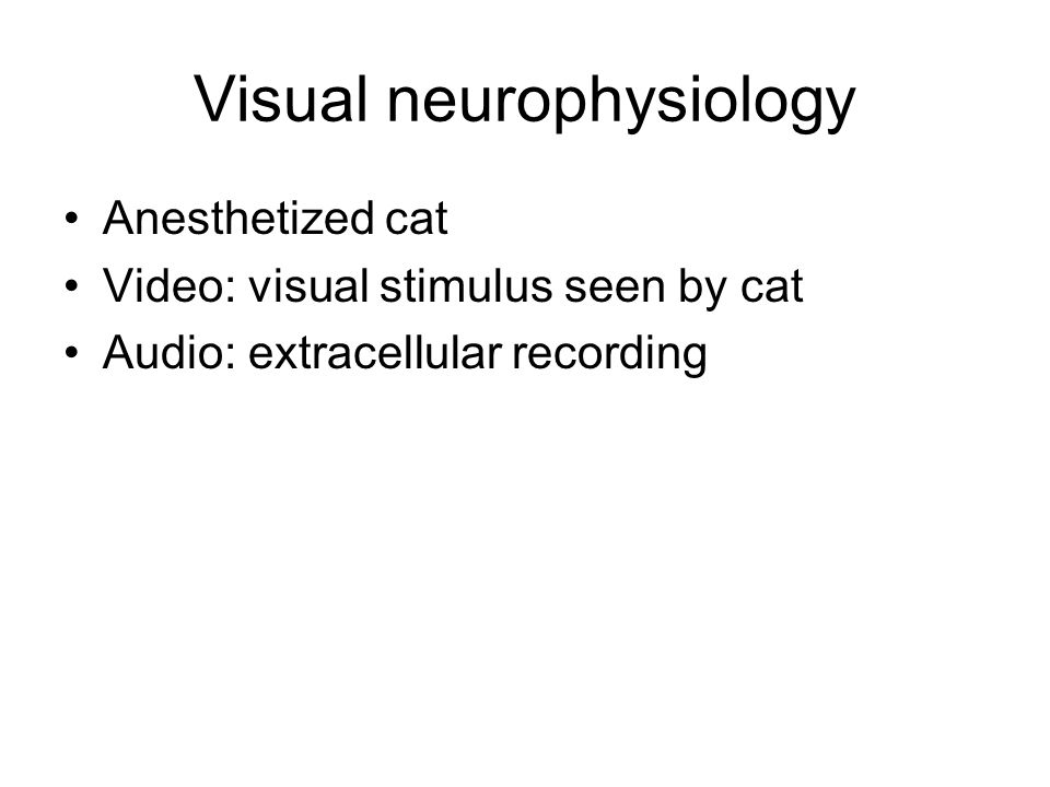 Visual neurophysiology