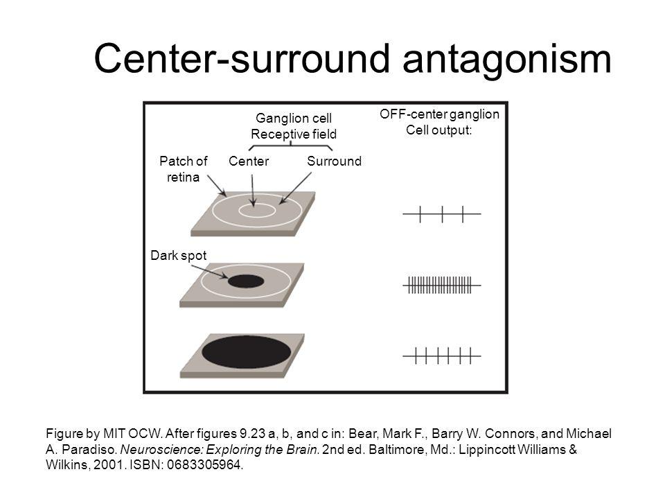Center-surround antagonism