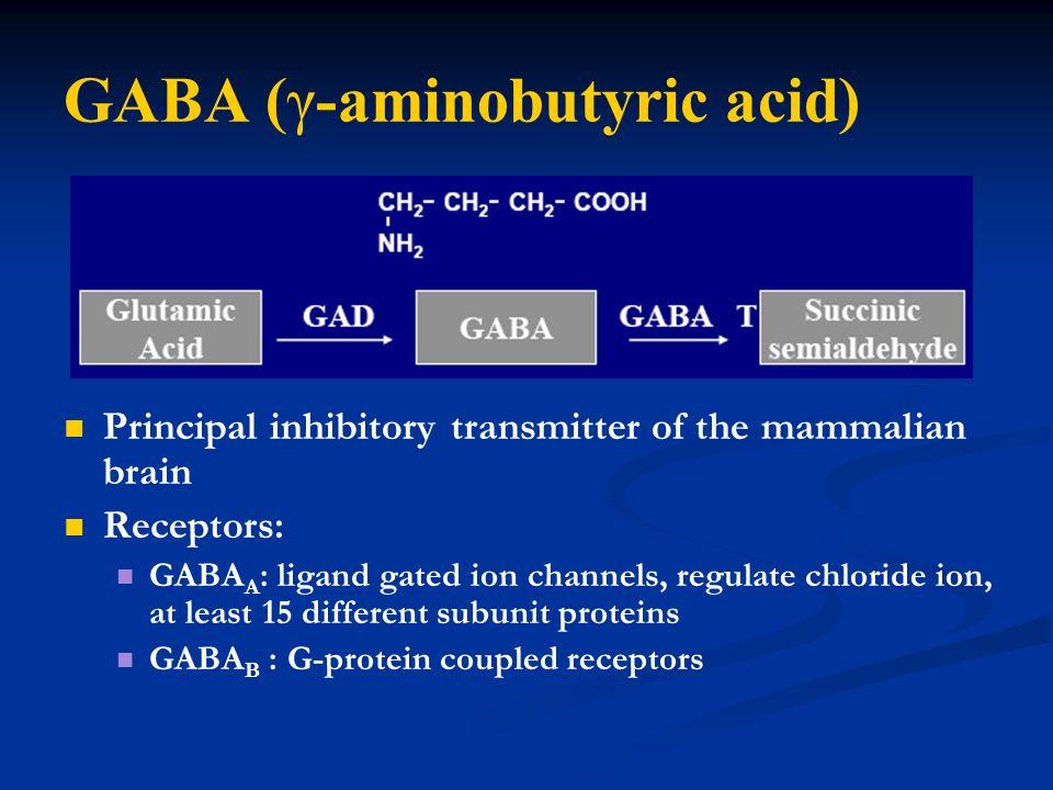 GABA (γ-aminobutyric acid)