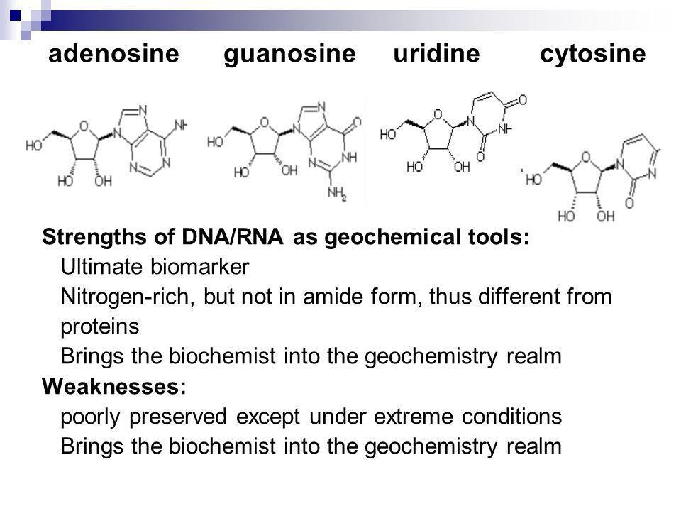adenosine guanosine uridine cytosine