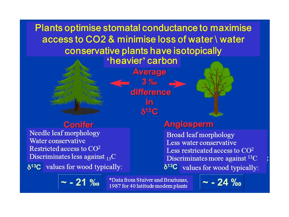 Plants optimise stomatal conductance to maximise access to CO2 & minimise loss of water \ water conservative plants have isotopically