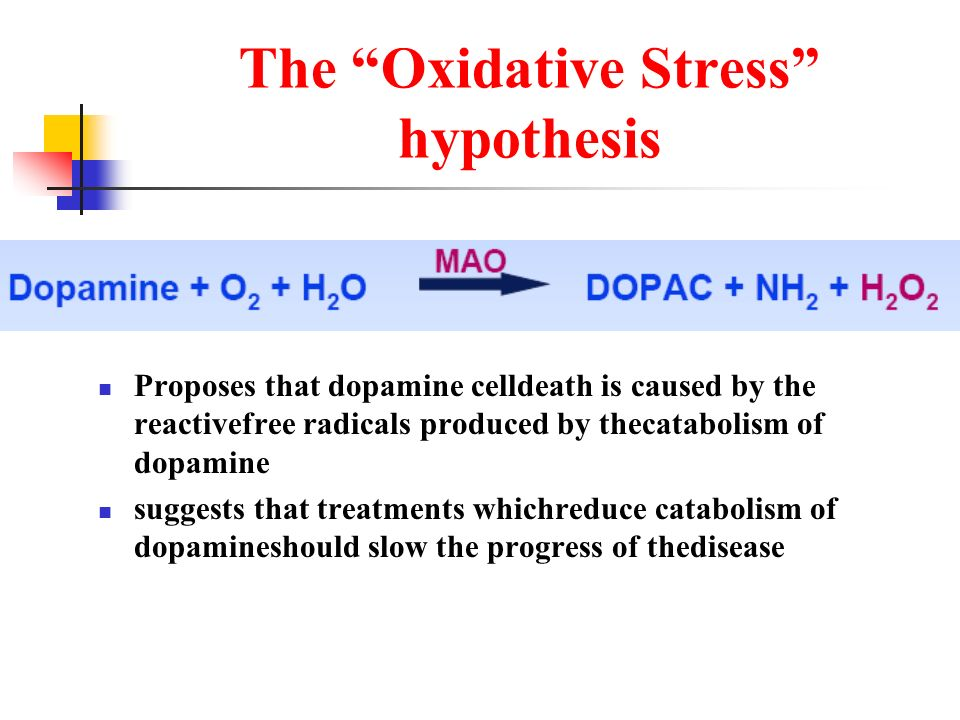 The Oxidative Stress hypothesis