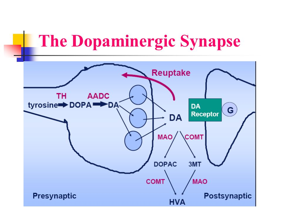 The Dopaminergic Synapse