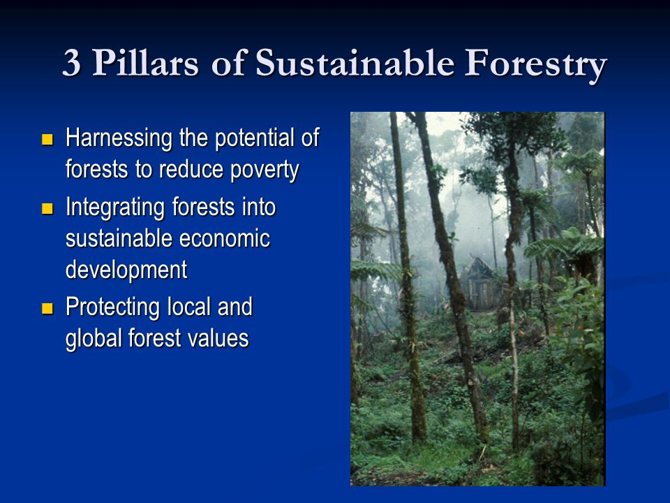 3 Pillars of Sustainable Forestry