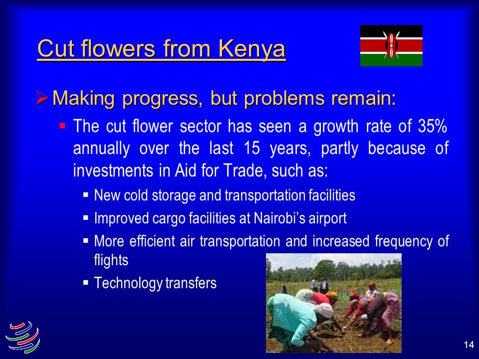 Cut flowers from Kenya Making progress, but problems remain: