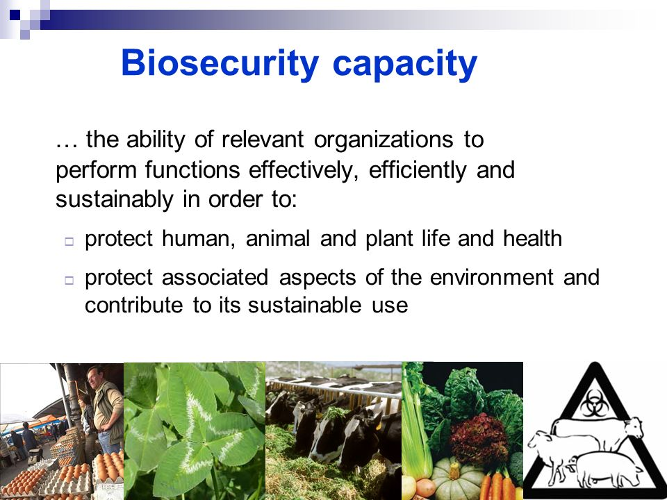 Biosecurity capacity … the ability of relevant organizations to perform functions effectively, efficiently and sustainably in order to:
