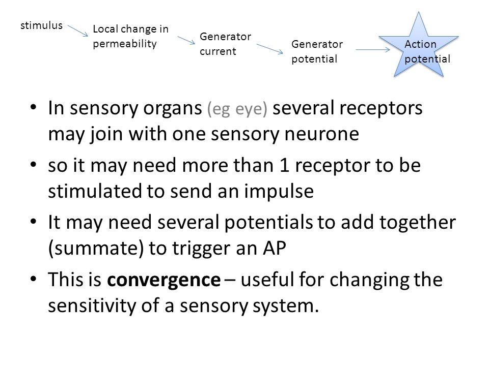 which sensory receptor responds to more than one stimulus Sensory nerves: types and functions of sensors and receptors  some of  these nerves can do more than one of the things i just mentioned  sensing a  stimulus and sending information about the stimulus to your central nervous  system.