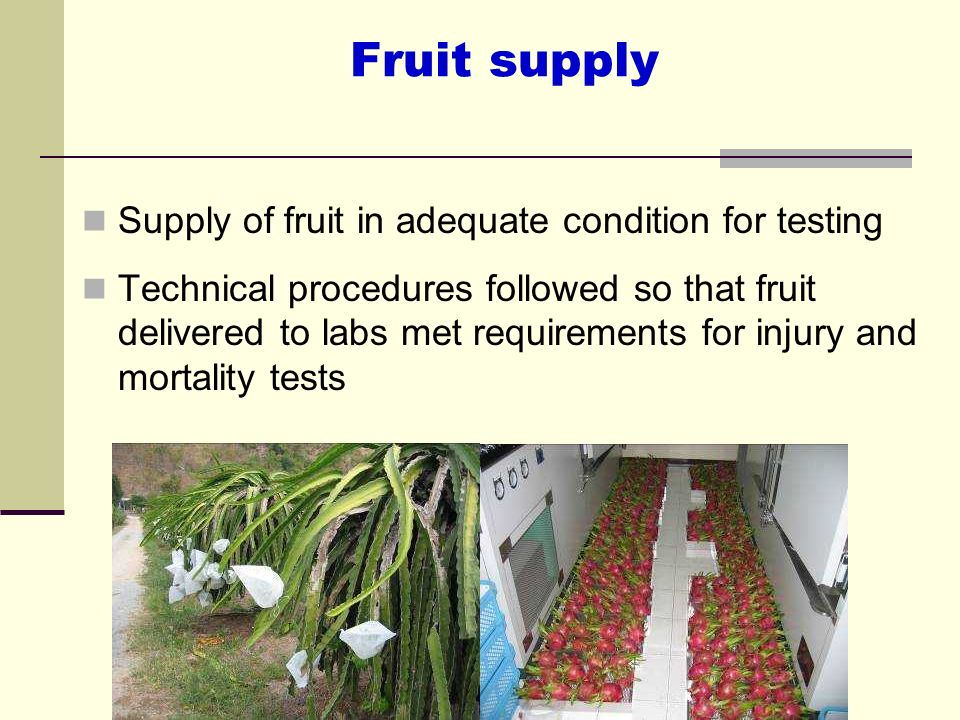 Fruit supply Supply of fruit in adequate condition for testing