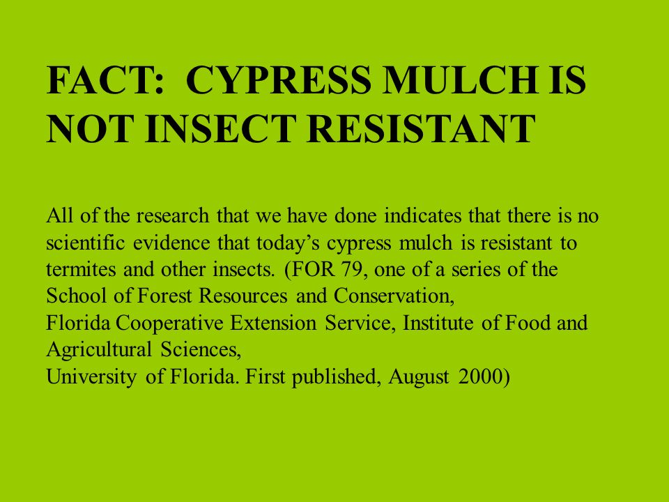 FACT: CYPRESS MULCH IS NOT INSECT RESISTANT