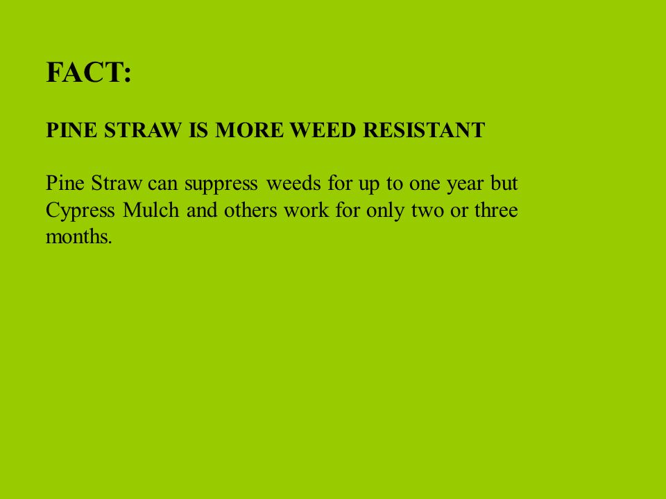 FACT: PINE STRAW IS MORE WEED RESISTANT