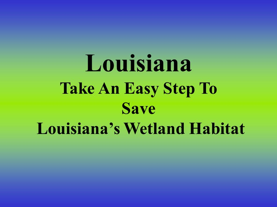 Louisiana's Wetland Habitat