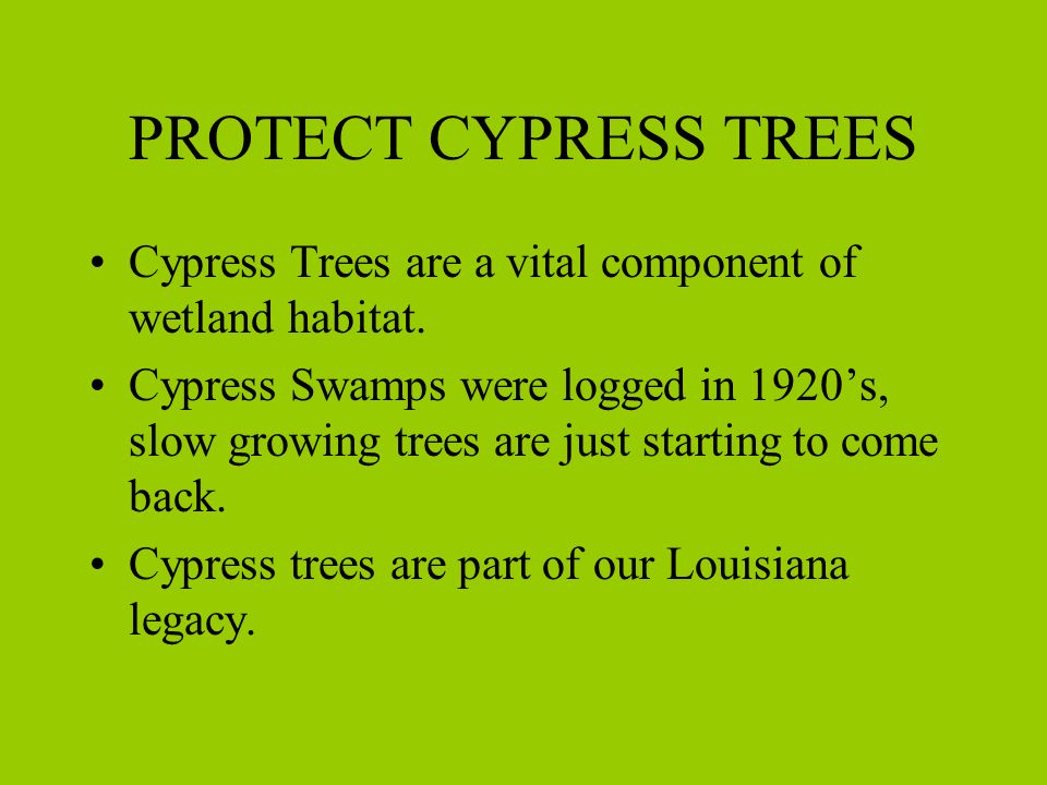 PROTECT CYPRESS TREES Cypress Trees are a vital component of wetland habitat.
