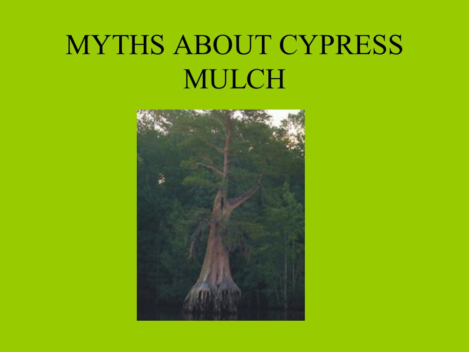 MYTHS ABOUT CYPRESS MULCH