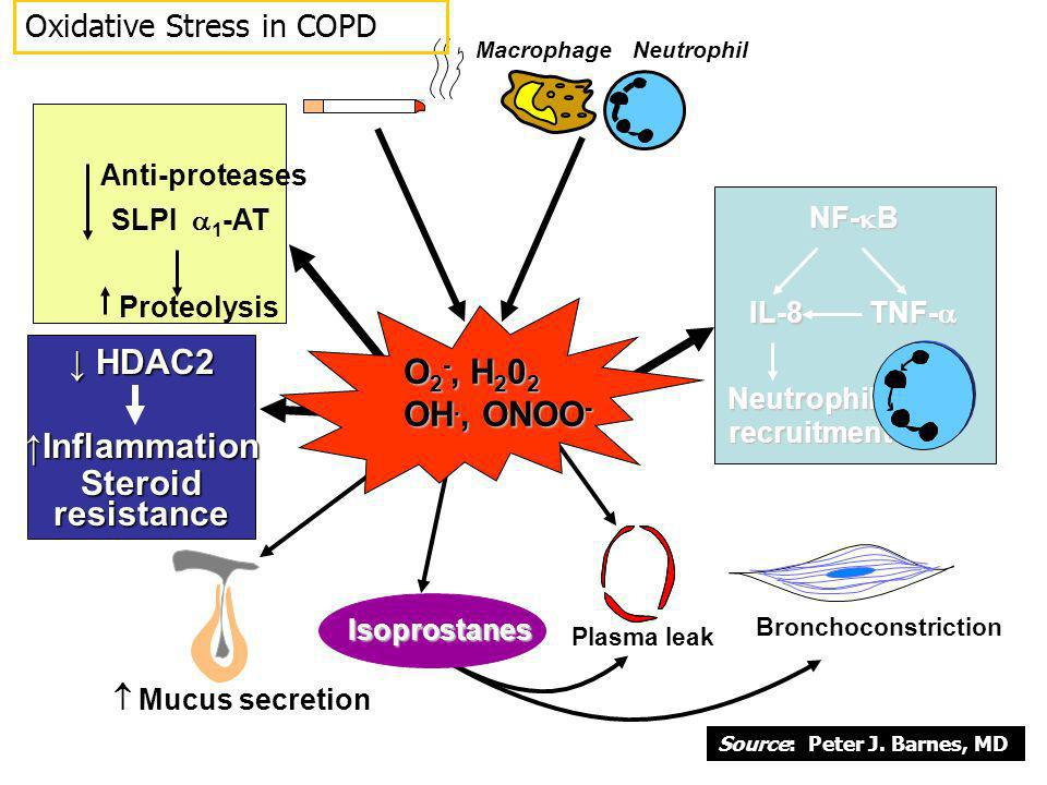 ↓ HDAC2 ↑Inflammation Steroid resistance