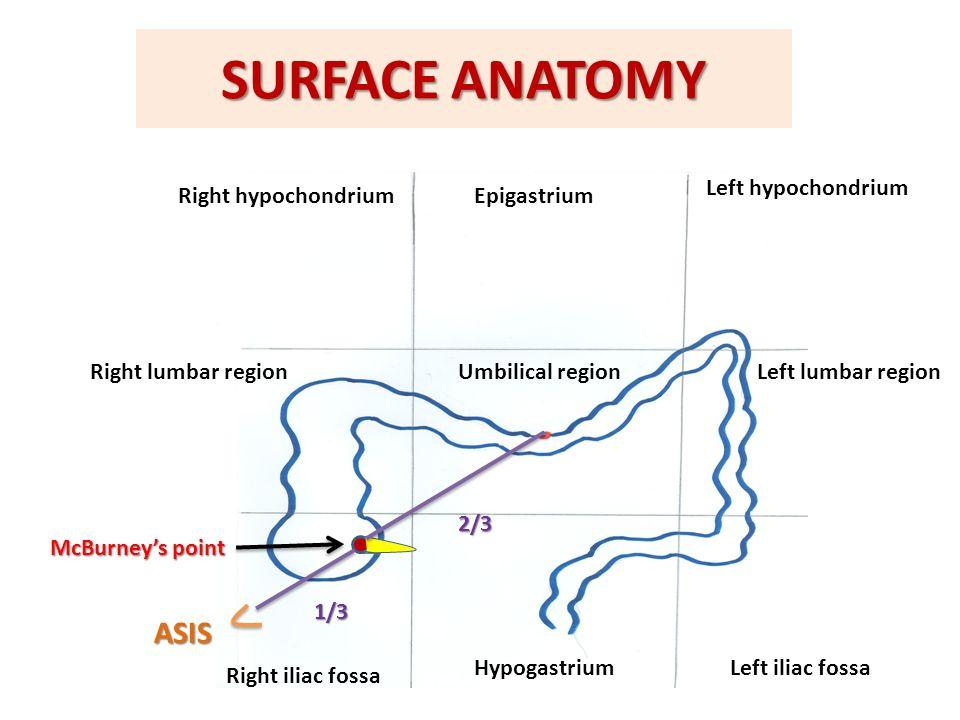 Right Iliac Fossa Anatomy