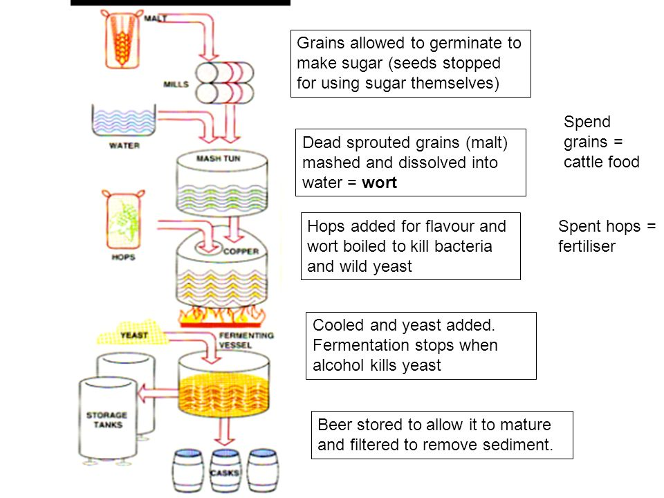 Grains allowed to germinate to make sugar (seeds stopped for using sugar themselves)