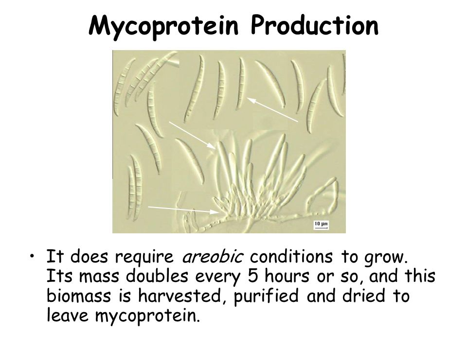 Mycoprotein Production