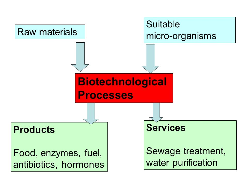 Biotechnological Processes