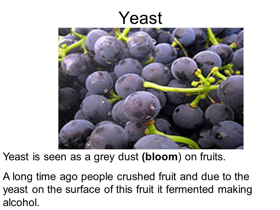 Yeast Yeast is seen as a grey dust (bloom) on fruits.