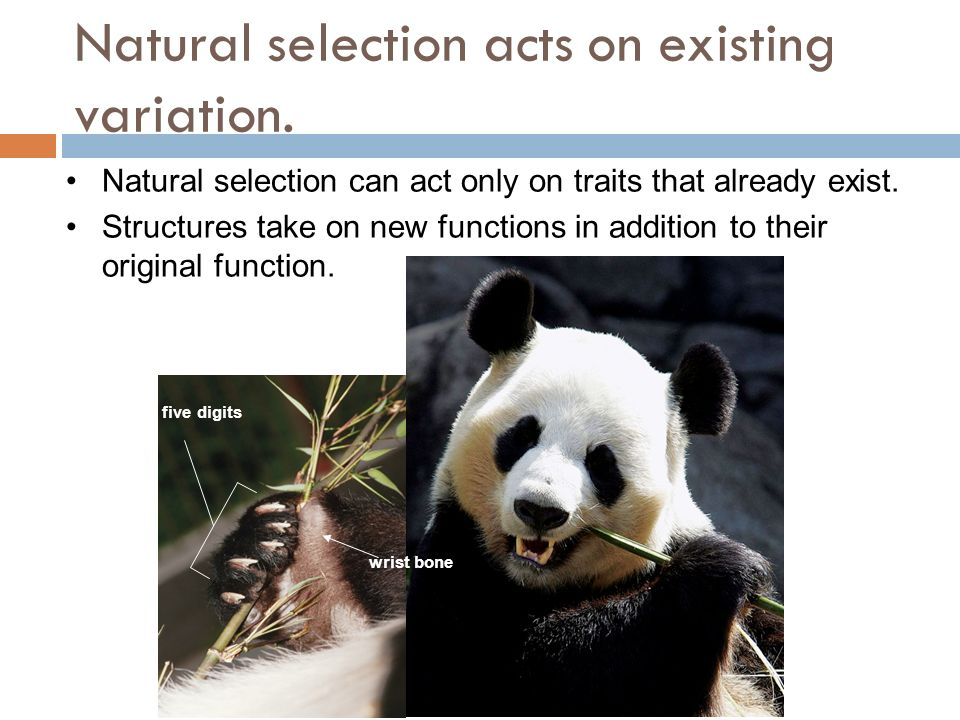 Why Is Natural Selection Non Random