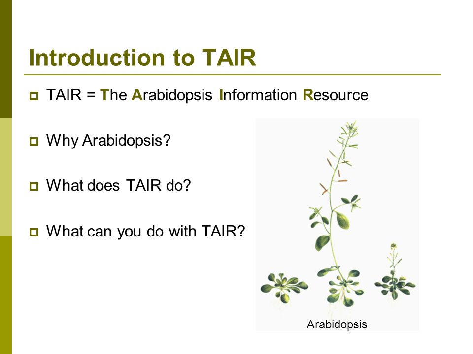Introduction to TAIR TAIR = The Arabidopsis Information Resource