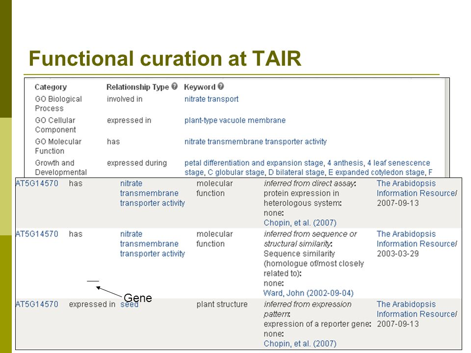 Functional curation at TAIR