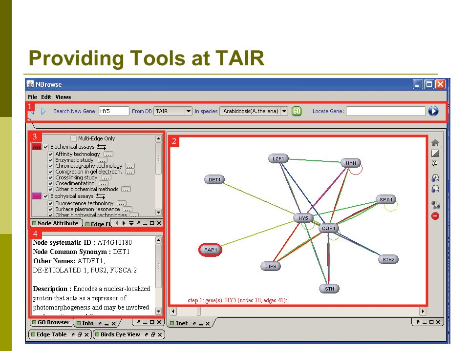Providing Tools at TAIR