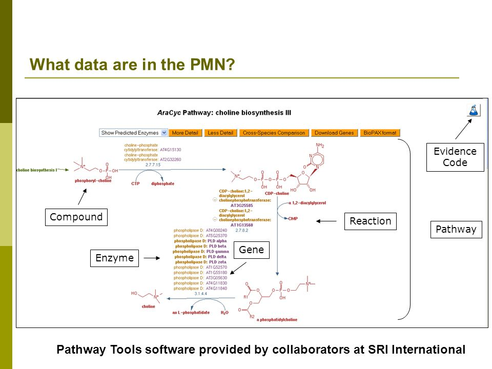 What data are in the PMN Evidence Code. Compound. Reaction. Pathway. Gene. Enzyme.
