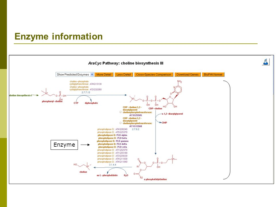 Enzyme information Enzyme