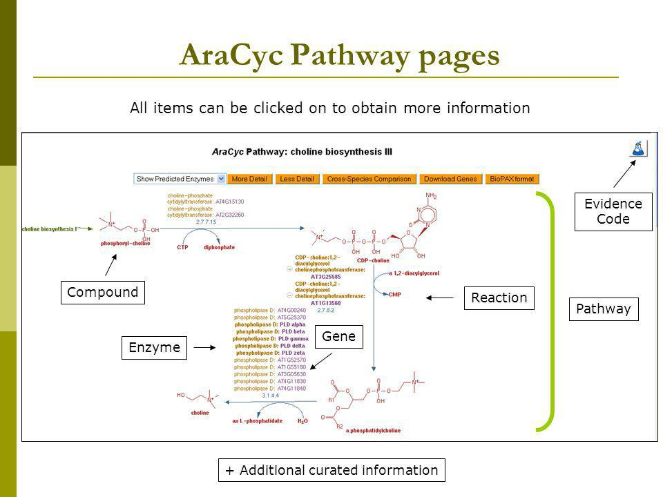 AraCyc Pathway pages All items can be clicked on to obtain more information. Evidence Code. Compound.
