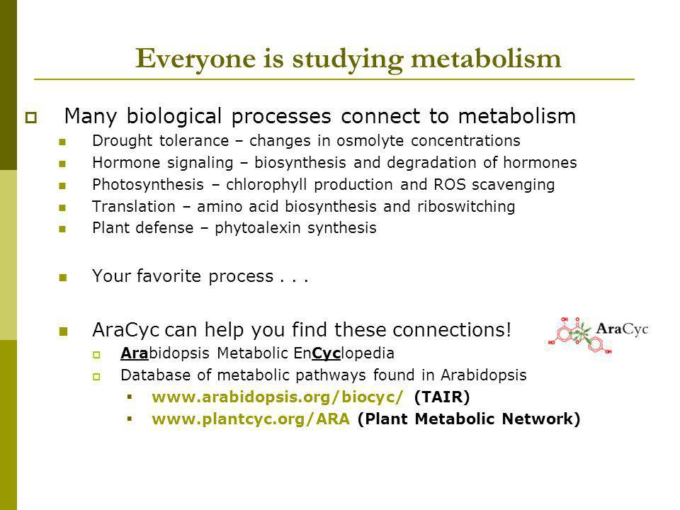 Everyone is studying metabolism