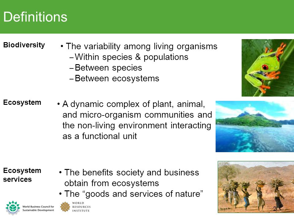 Definitions The variability among living organisms
