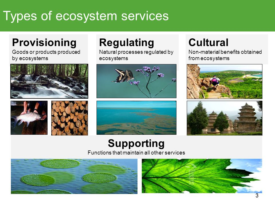 Types of ecosystem services