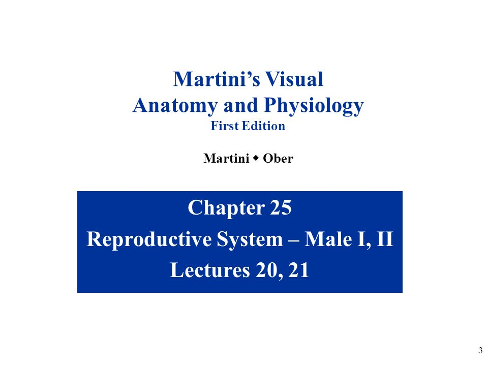 anatomy and physiology ch 1 study guide essay Physiology chapter 6 review questions answers study guide for anatomy and physiology study guide : human anatomy and physiology - chapter 1.