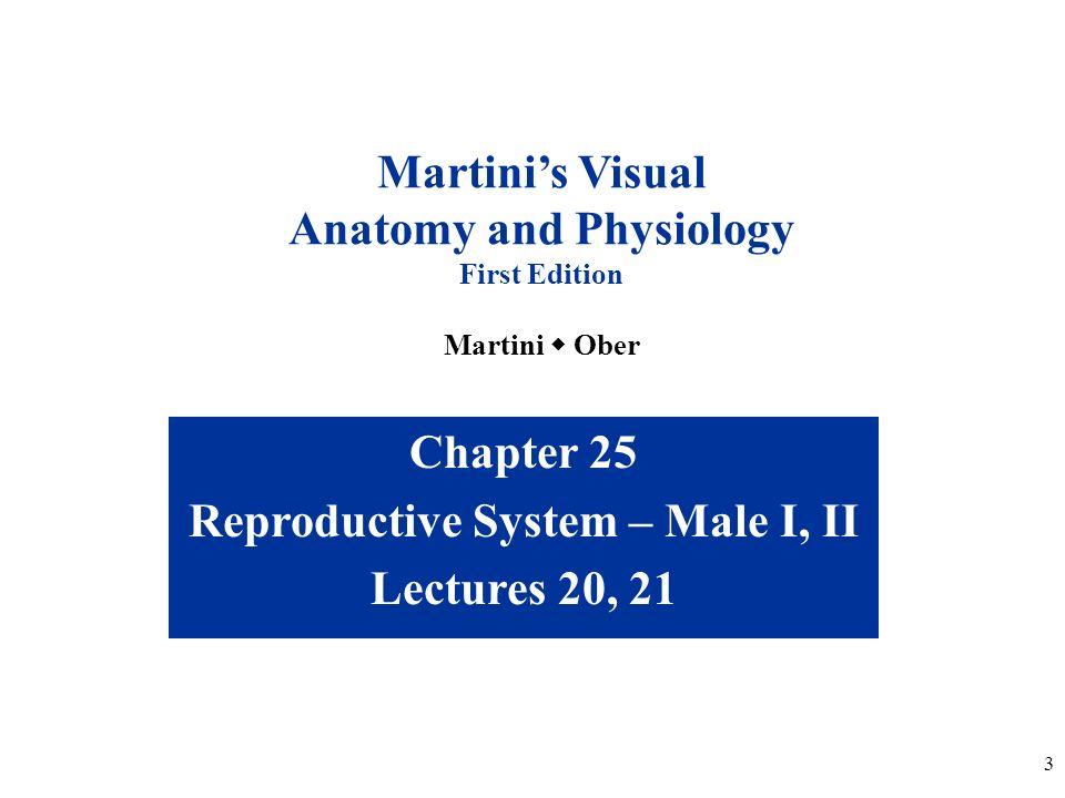 Erfreut Human Anatomy And Physiology Exam 2 Galerie - Menschliche ...