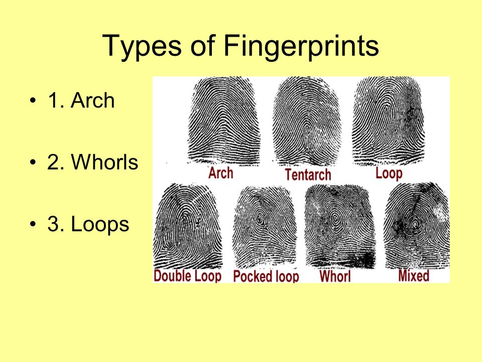 Fingerprints. - ppt video online download