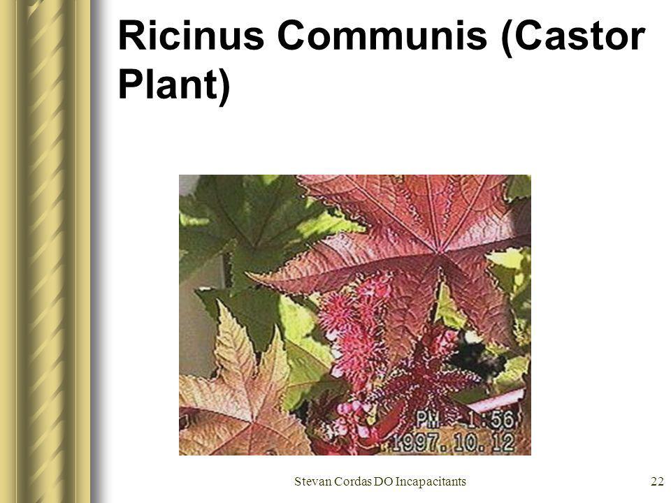 Ricinus Communis (Castor Plant)