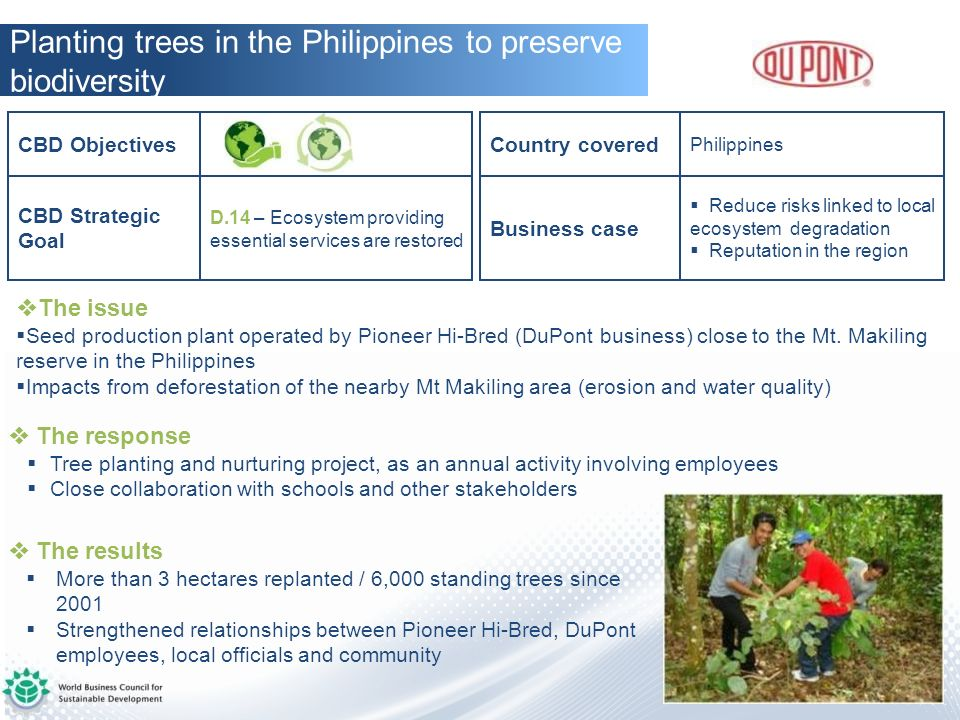 Planting trees in the Philippines to preserve biodiversity