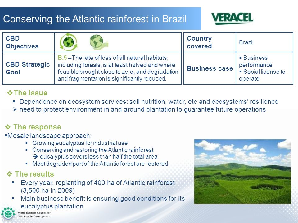 Conserving the Atlantic rainforest in Brazil