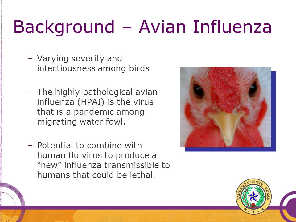 Background – Avian Influenza