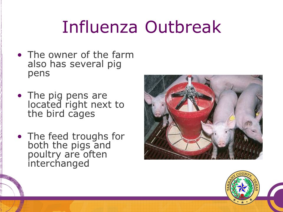 Influenza Outbreak The owner of the farm also has several pig pens