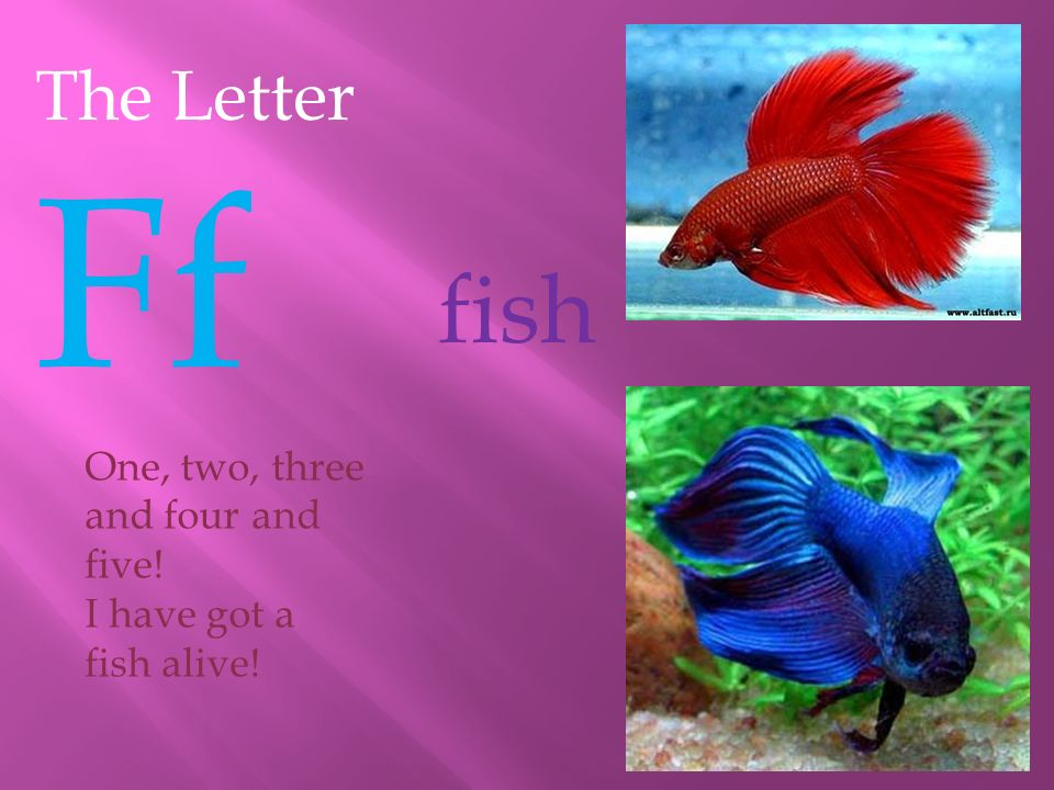 fish The Letter Ff One, two, three and four and five!