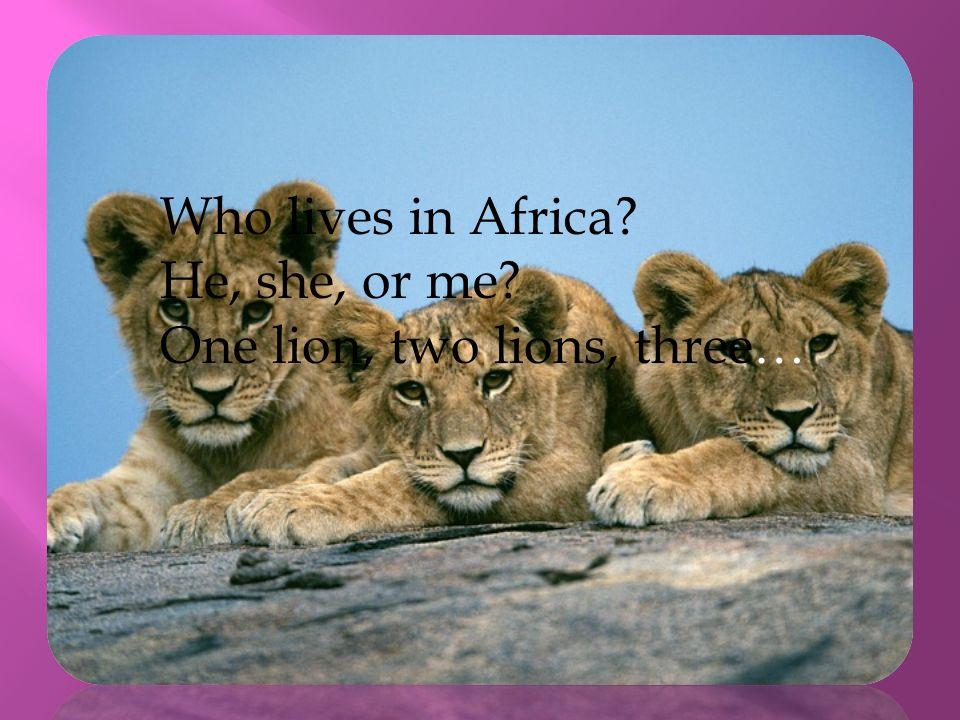 Who lives in Africa He, she, or me One lion, two lions, three…