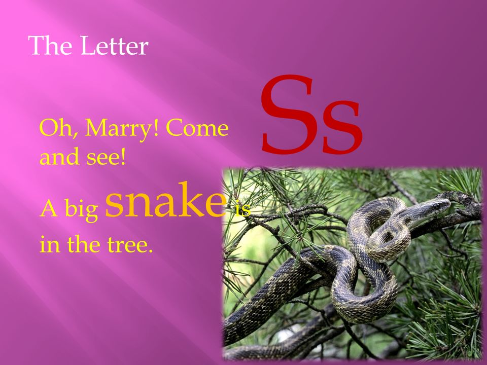 The Letter Ss Oh, Marry! Come and see! A big snake is in the tree.